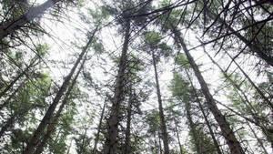 Klimaatbestendig bos moet stervende bomen redden