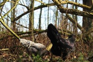 Hoe boeren broeikasgassen kunnen verminderen