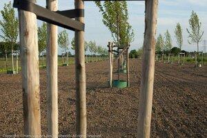 Bos, bomen en natuur in het ontwerp Klimaatakkoord