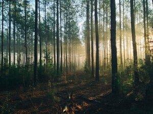 Timmermans wil meer bossen bijplanten