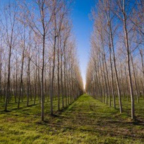 Agroforestry Netwerk Noord-Brabant