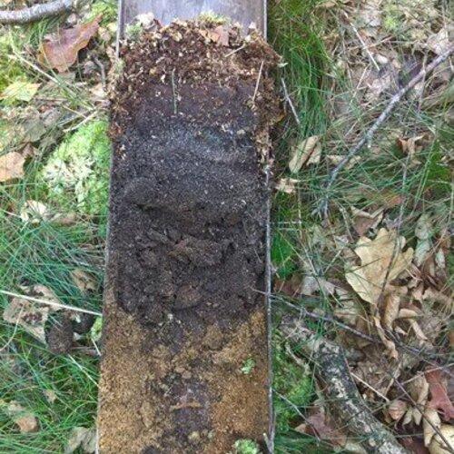 Bodemkoolstof in bos