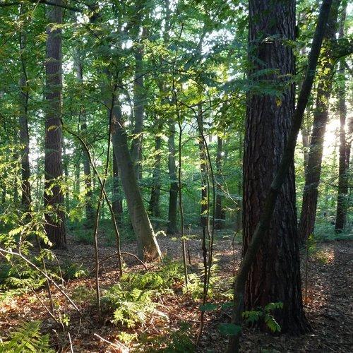 Scan bos en hout Noord-Brabant