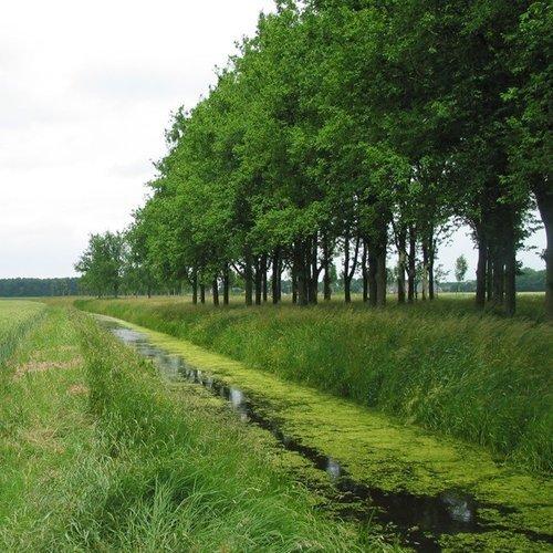 Bos en hout voor het Groningse landschap