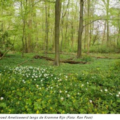 Klimaatslim nieuw bos in de provincie Utrecht