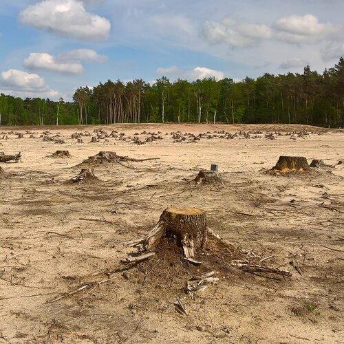Rechtsanalytisch onderzoek bos en klimaat
