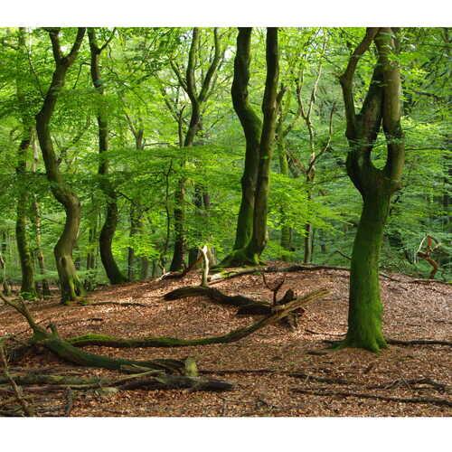 Gereedschapskist Klimaatslim Bos- en Natuurbeheer