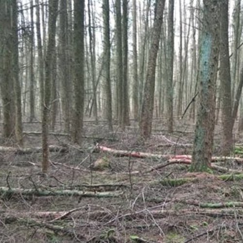 Koolstofopslag in beheerde en onbeheerde bossen