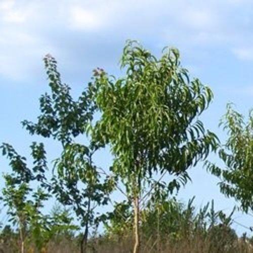 Voedselbossen in Flevoland en Noord-Brabant