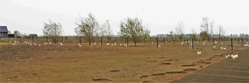 Voorbeeldproject: Kippenuitloop in Dreumel